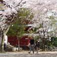 07. 桜吹雪
