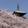 13. 五重塔と桜と晴れた空